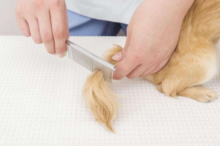 ゴミやほこりがつきやすいシッポは、先端までこまめにブラシをかけて清潔を保とう。