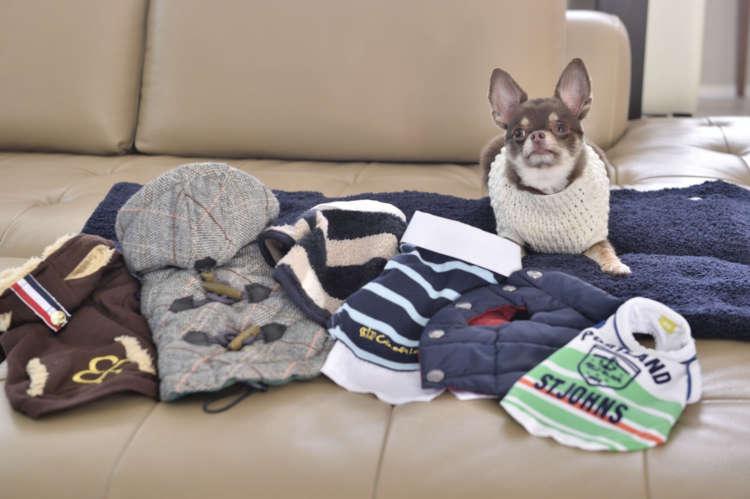 基本的に洋服を着せるのは、寒い時期の散歩の時のみ。そのため持っているのは冬服オンリー。洋服は嫌がることなく着てくれる。写真でアニキが着ているセーターは、犬友達が編んでくれたもの。
