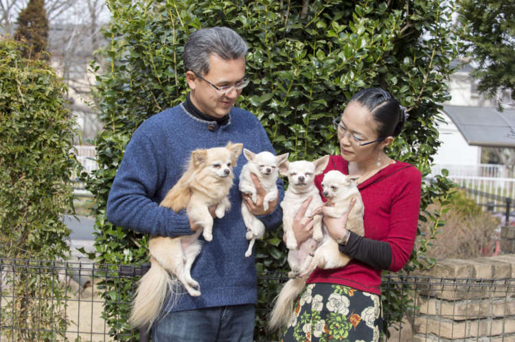 目に入れても痛くないほどチワワ組の4匹を愛している渡邉さんご夫妻。「私の子供たちです!」と、理恵さん。