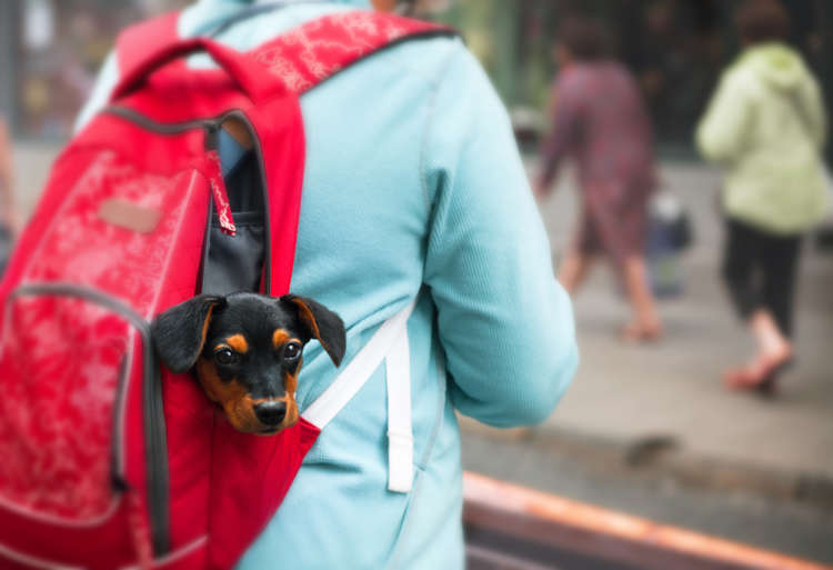 犬用リュックの用途や種類、選び方のポイントと注意点