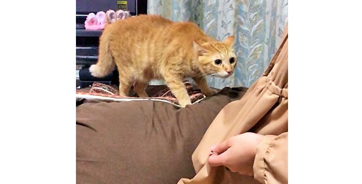 """お姉ちゃんがワンコの """"ニオイ"""" をつけて帰って来た! → それに気づいた猫さんは…(;´∀`)"""