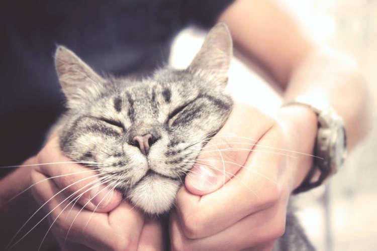 とっても気持ちいい……。 猫をマッサージしてあげよう!