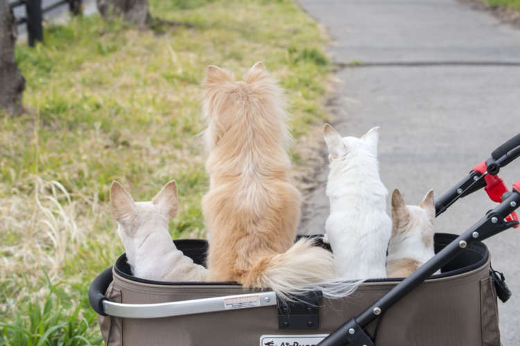 4匹中 実は数匹 猫がいる?