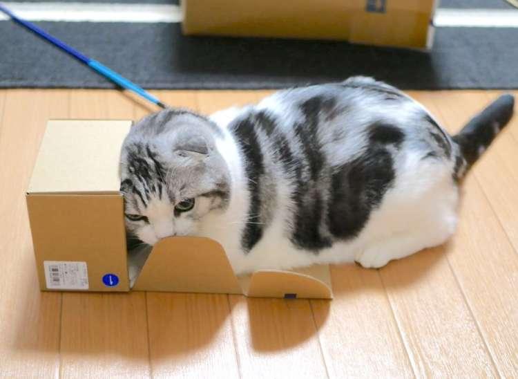 小さい箱に入ろうとするニャンコ → 箱に入れないと気づいた時の反応が、かわいすぎた♡