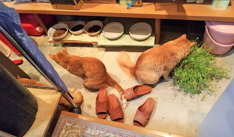 柴犬とニャンコが仲よく密談♡ → ところが、こちらを振り向くとそこに居たのは…(; ・`д・´)