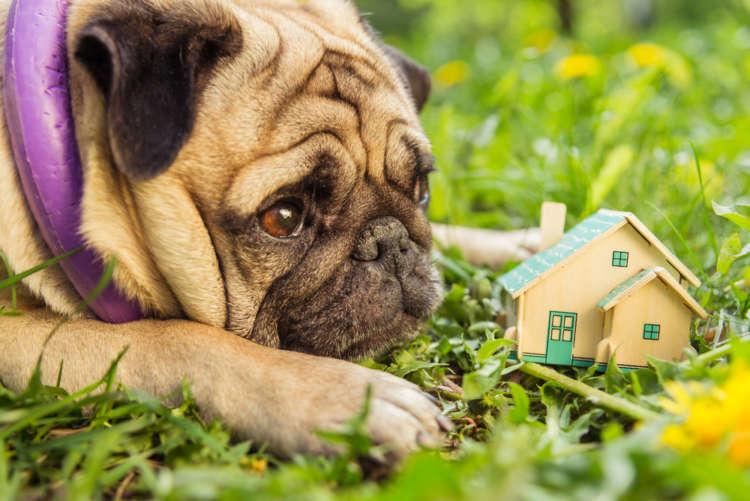 犬が留守番中に吠える場合はどうしつければいい?