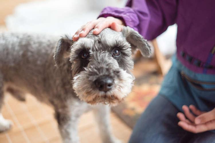 犬の脳炎 考えられる原因や症状、治療法と予防法