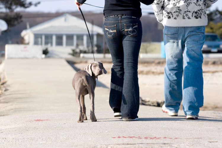 犬の後ろ肢がおかしい。歩き方の変化や異常をチェック