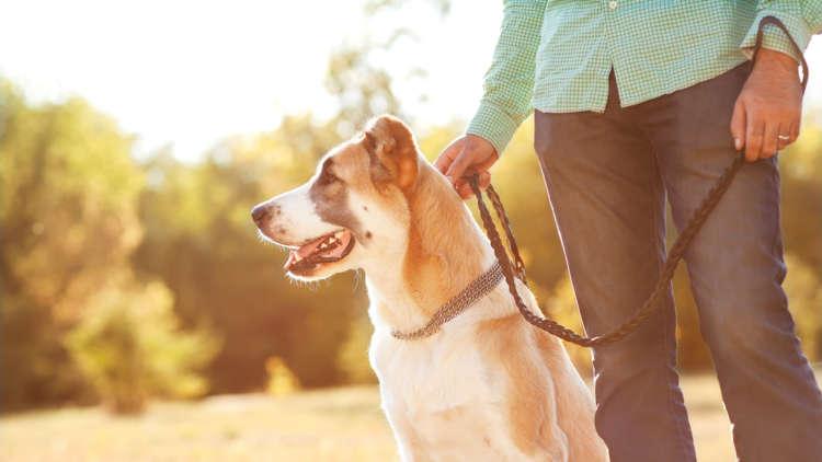 犬がリードを嫌がる時の対処法と散歩のポイント