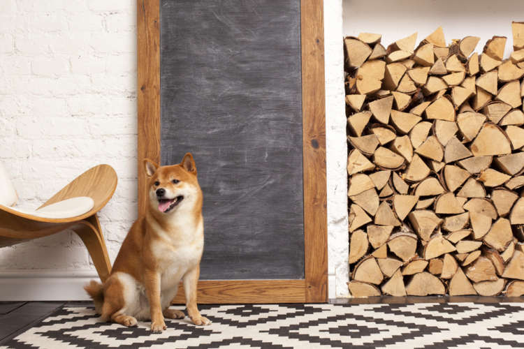 柴犬をケージで飼う時に適切なケージの大きさは?