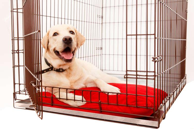 犬のケージの選び方! 犬用ケージの用途や種類、使用上の注意
