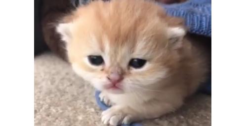 【ここ暖かいにゃ】赤ちゃん猫が見つけた、ポカポカな場所。ちょうどいいフィット感に… キュン♡