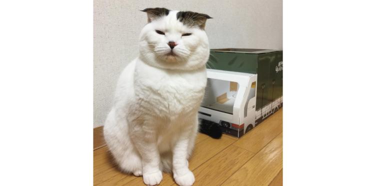 【親方みたいな貫禄♪】軽トラックを乗りこなす猫さん。絶妙なマッチングで渋カワイイ(*´艸`*)♡6枚