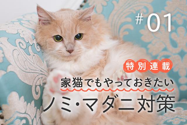 愛猫のために動物カメラマンがずっと続けているノミ・マダニ対策って?