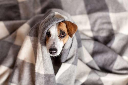 犬の震えが止まらない原因と考えられる病気