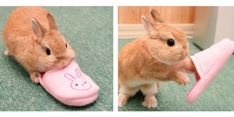 【この子、なんなの!?】ウサギ柄のスリッパを見たウサちゃん。まさかの行動にでる…(; ・`д・´)