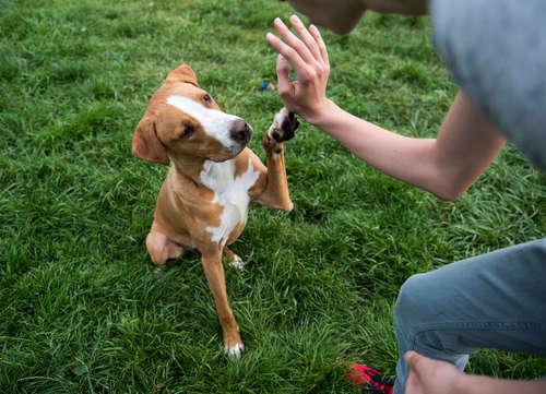 【獣医師監修】犬が合図をしたら戻ってくる「おいで」のしつけ方について
