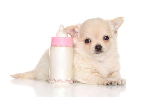 犬に牛乳を与えてはいけない理由と、飲んでしまった時の対処法