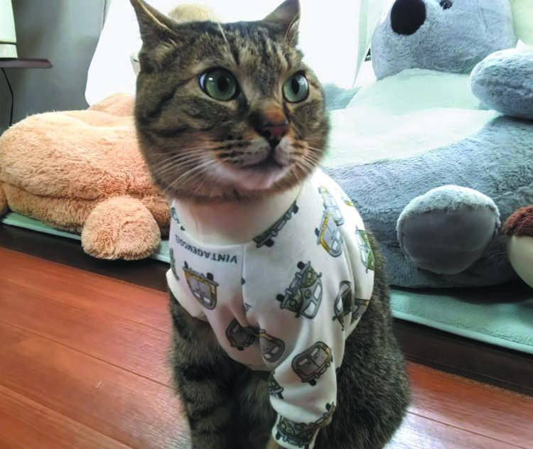 前脚に皮膚炎ができた猫は、片腕をカバーした服を着用