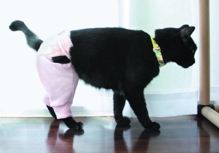 ズボンは過剰グルーミング防止用だが半身不随の猫の擦り傷防止に役立つ