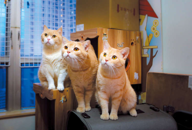 同居中の兄弟猫・ケーキ(中央)とミルク(右)