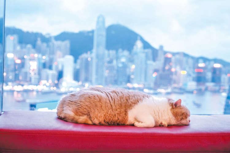 ハーバービューとあにきは香港の象徴だ