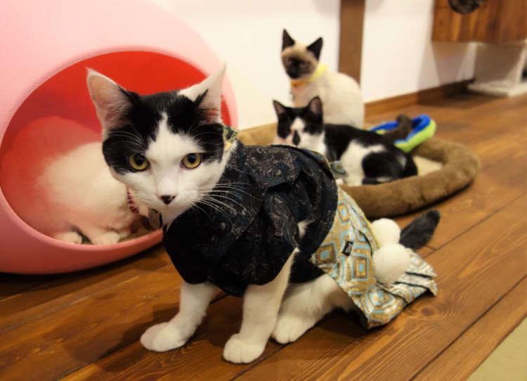 【猫びより】女将の想いが結実した素敵な旅館併設猫カフェ【長野】(辰巳出版)