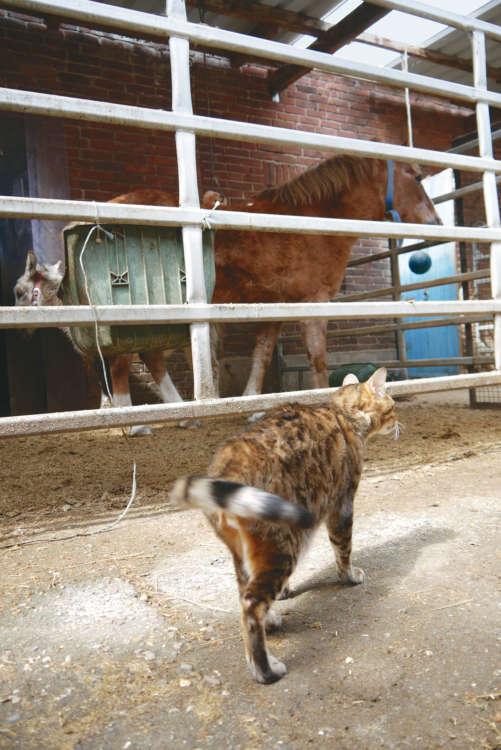 虎視眈々と厩を抜ける機会を狙うミロ