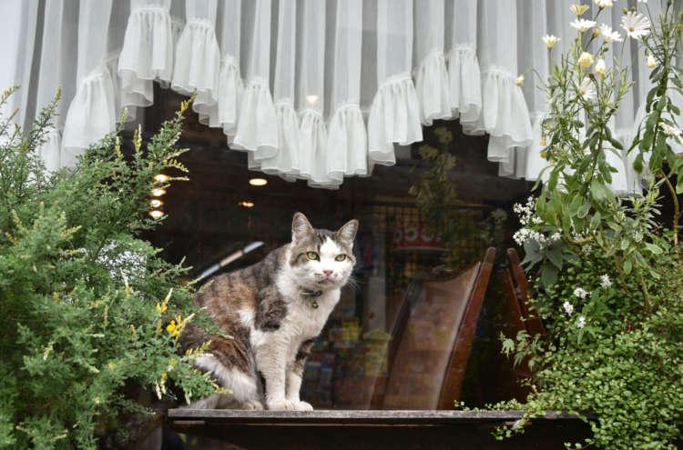 窓辺のベンチで道ゆく人々を眺める
