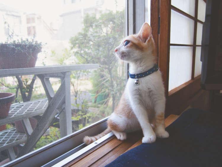 外の物音に興味しんしん。全身で世界を感じ取る