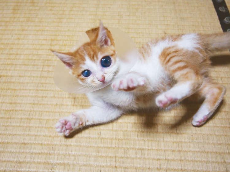 【猫びより】【ハンデに負けニャイ!】ムーちゃん 大好きな人の笑顔が見える!(辰巳出版)
