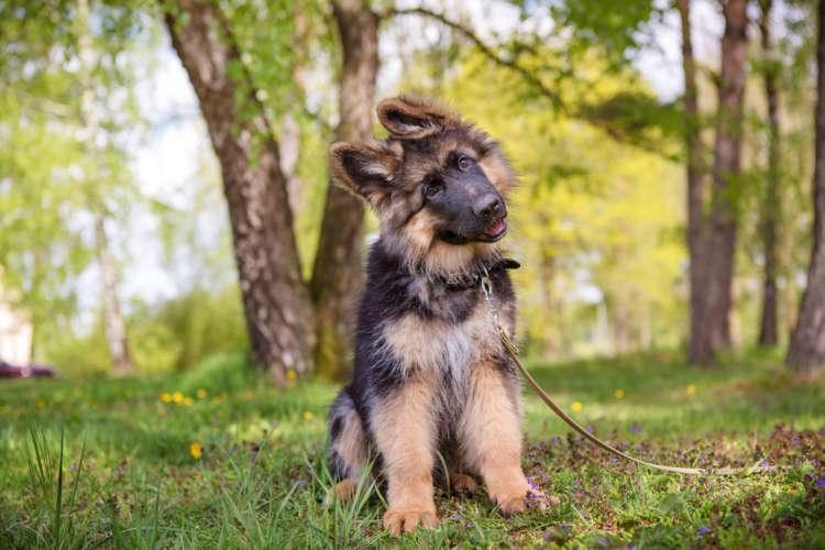 犬が散歩で歩こうとしない場合の対処法