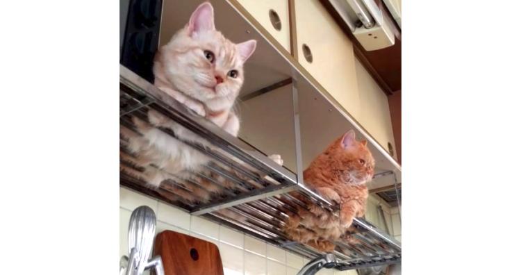 「お部屋の安全、守りますニャ!」お家を警備する猫ちゃん → この直後、まさかの警備放棄…♡