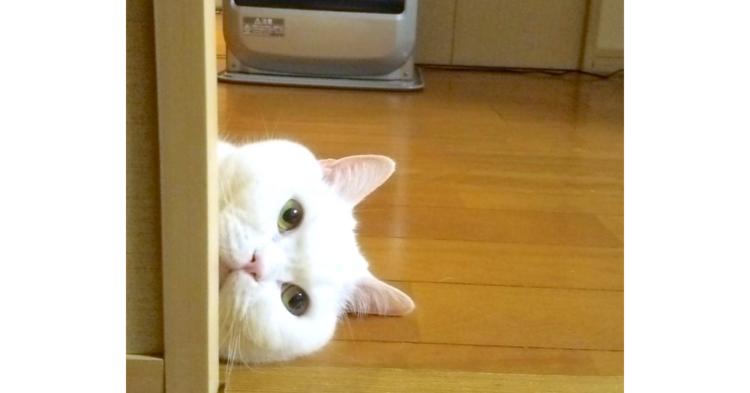"""【ぬくぬくニャ〜♡】寒い冬の暖のとり方が独特なニャンコ。""""変わったポーズ"""" が話題に…(゚д゚)!"""
