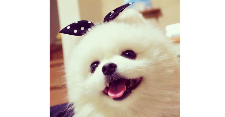 【今週のうちのワンコ #3】幸せな笑顔をみんなにお届け♪ ニコニコ顔が素敵なコロンちゃん!