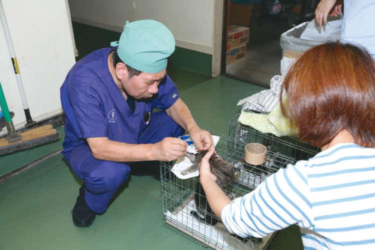 保護された子猫が病院に到着。まずノミの駆除を行う