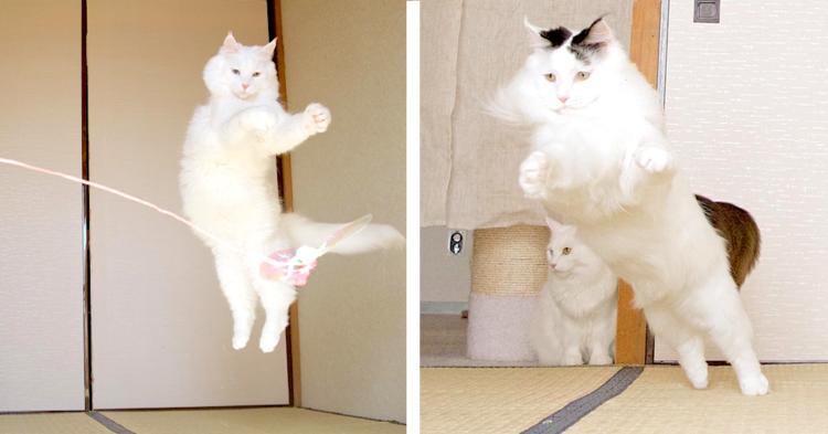 【浮いてる?】元気に遊ぶ猫たちを写真に撮ったら… 面白かわいい瞬間だらけに(*´艸`*)!