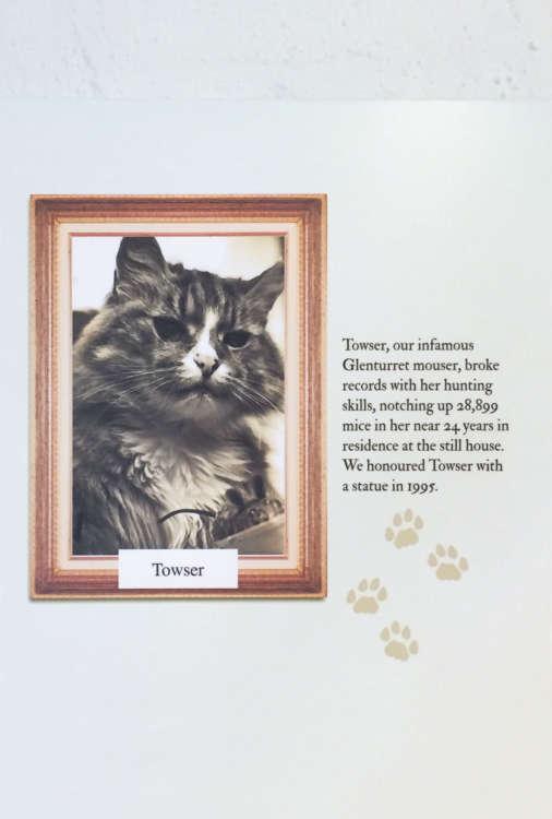ありし日のタウザー。 メスの猫で1963年から1987年まで活躍しました