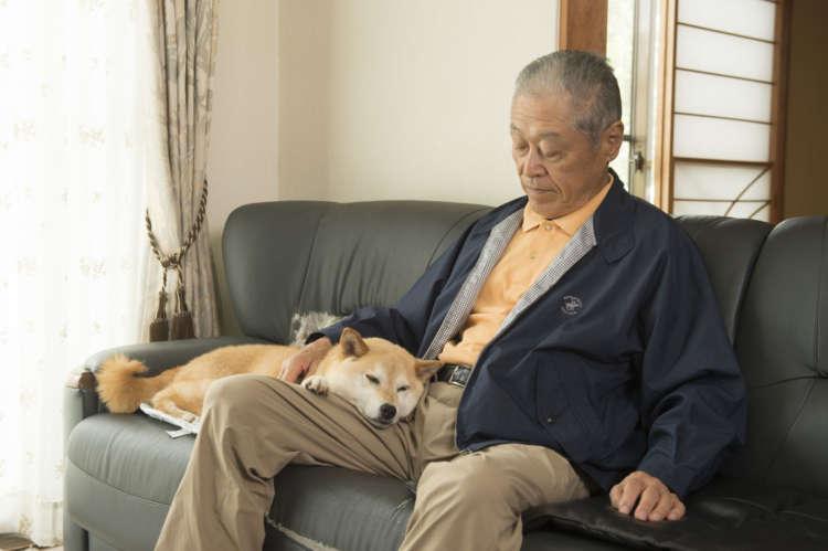 超甘えん坊のまめは、家の中では家族の誰かと常にベッタリ~。父の宏二さんのぬくもりを感じながらくつろぎ、微睡む至福の時間が何よりも好き。