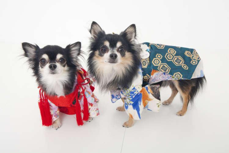 2018年は待望の戌年。愛犬と一緒に初詣に出かけるときのマナー&おすすめの神社とは?