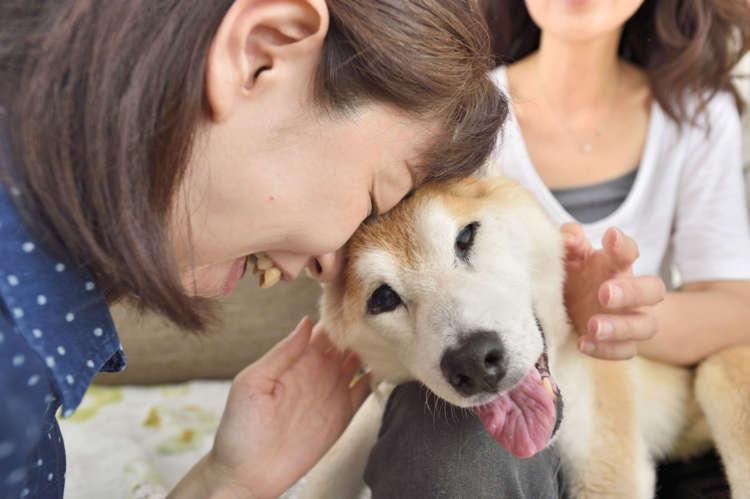【陽だまりのような温もりが愛しい…】暮らして感じる老犬の味わい
