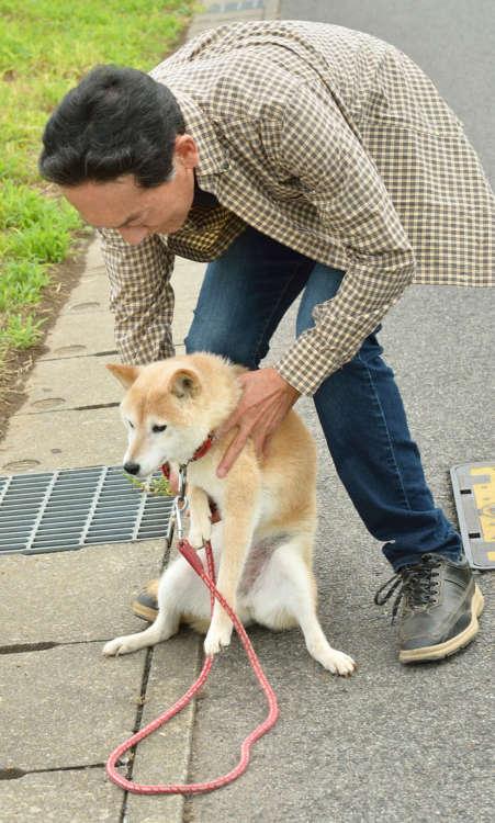 1日2回、朝と夕方に20~30分の散歩を実践しているが、なかなか歩かずにすぐ帰りたがる楓。