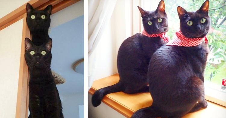 【神秘的にかわいい♡】仲良しな黒猫兄弟の、ひとつひとつの動きがピタッと一致して…(〃∇〃)