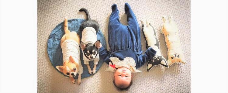 【妹ができたワン♪】新しい家族に大喜びなワンコたち。赤ちゃんにピタッと寄り添う姿に、ほっこり♡