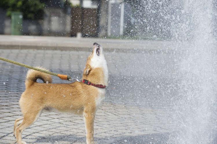 広い公園の大きな噴水……うひょ~楽しい~!