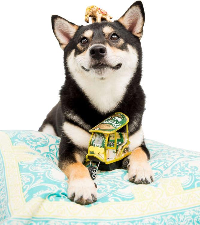 犬を甘やかす秘密とは? 犬と飼い主の笑顔から探れ!