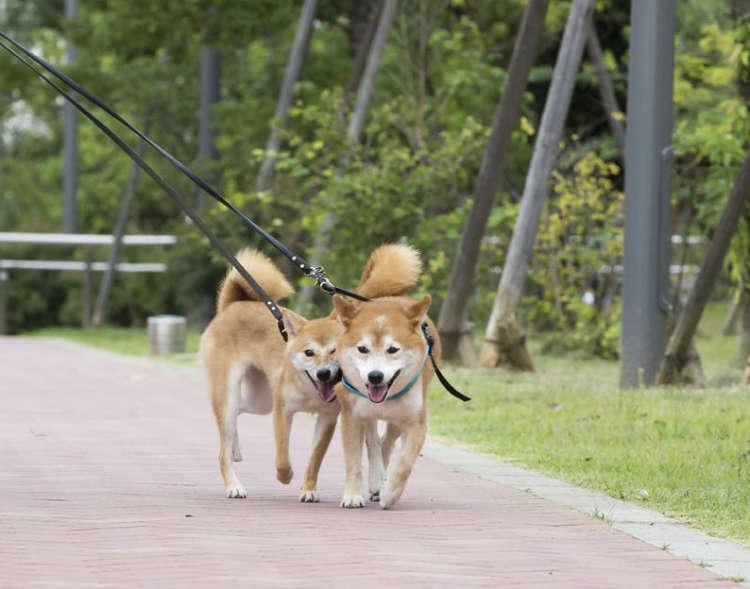 一緒の散歩は二倍楽しい
