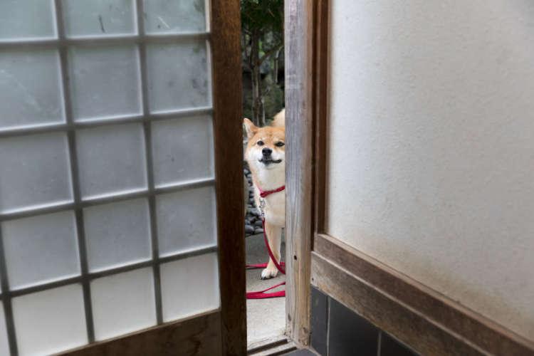 そろそろ入れてくれない?