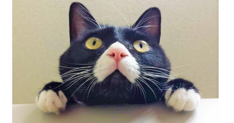 【今週のうちのニャンコ #4】お口のハートマークは幸せの証♡ みんなに安らぎを与える猫サリーちゃん。