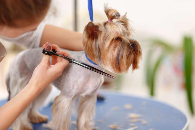 犬のトリミングに。犬用のバリカンの用途や種類、選び方、注意点について